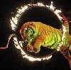 Цирки в Чернянке